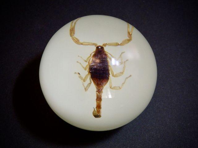 昆虫 Sift Knob